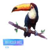Ejemplo del estilo de la acuarela del vector del pájaro Foto de archivo