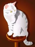 Ejemplo del gato que se sienta Imagen de archivo