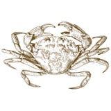 Ejemplo del grabado del cangrejo stock de ilustración