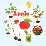 Ejemplo del jardín del vector en estilo plano Plantando manzanos, Fotos de archivo