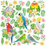 Ejemplo del loro del vector Pájaro tropical aislado stock de ilustración