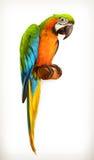 Ejemplo del macaw del loro Foto de archivo libre de regalías
