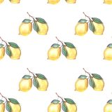 Ejemplo del modelo del limón de la acuarela ilustración del vector