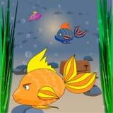 Ejemplo del mundo subacuático Foto de archivo libre de regalías