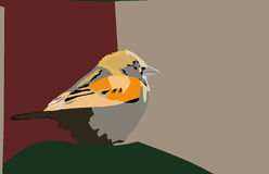Ejemplo del pájaro Imágenes de archivo libres de regalías