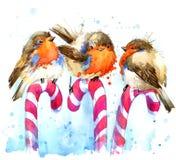 Ejemplo del petirrojo del pájaro petirrojo del pájaro y fondo de la acuarela del caramelo de la Navidad Fotos de archivo