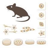 Ejemplo del ratón y de células Imagen de archivo