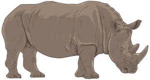 Ejemplo del rinoceronte ilustración del vector