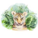 Ejemplo del tigre de la acuarela e impresión tropical de la selva de las hojas del paraíso del verano Planta de la palma y o aisl ilustración del vector