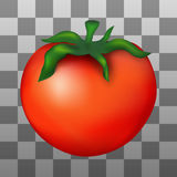 Ejemplo del tomate maduro rojo Imagen de archivo