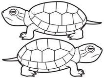 Ejemplo del tortugas imagen de archivo