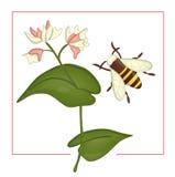 Ejemplo del vector del alforfón coloreado con el abejorro ilustración del vector