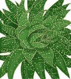 Ejemplo del vector del cactus con las espinas dorsales Fotos de archivo
