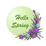 Ejemplo del vector con el ramo de azafranes violetas y azules Primavera de la inscripción hola con la decoración de las flores de ilustración del vector