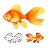 ejemplo del vector 3d de los peces de colores aislados en el fondo blanco libre illustration
