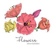 Ejemplo del vector de flores coloridas hermosas bosquejo Fotos de archivo libres de regalías