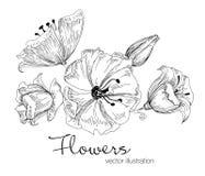 Ejemplo del vector de flores hermosas bosquejo Fotografía de archivo