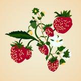 Ejemplo del vector de fresas en fondo en colores pastel Fotografía de archivo