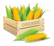 Ejemplo del vector de la caja del maíz Fotos de archivo