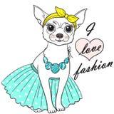 Ejemplo del vector de la chihuahua de la muchacha Bosquejo de moda lindo del perro Fotografía de archivo