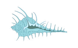 Ejemplo del vector de la concha marina Fotografía de archivo libre de regalías