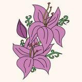 Ejemplo del vector de la flor del lirio Imagen de archivo