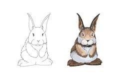 Ejemplo del vector de la historieta del libro de colorear o de la página del conejito de pascua libre illustration
