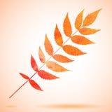 Ejemplo del vector de la hoja pintada acuarela anaranjada Imagen de archivo libre de regalías