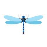 Ejemplo del vector de la libélula stock de ilustración