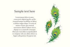 Ejemplo del vector de la pluma del pavo real Foto de archivo libre de regalías