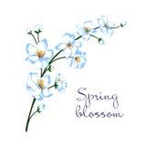 Ejemplo del vector de la rama del flor de la primavera Foto de archivo
