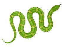 Ejemplo del vector de la serpiente verde Fotografía de archivo