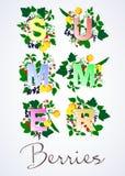 Ejemplo del vector de las bayas y de las frutas del verano Fotografía de archivo libre de regalías