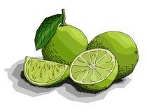 Ejemplo del vector de las cales de la fruta del dibujo Fotografía de archivo libre de regalías