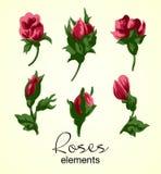Ejemplo del vector de los elementos de las rosas rojas Fotos de archivo