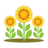Ejemplo del vector de los girasoles libre illustration