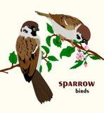 Ejemplo del vector de los pájaros del gorrión Imágenes de archivo libres de regalías