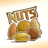 Ejemplo del vector de nueces stock de ilustración