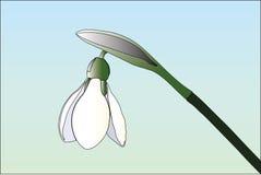 Ejemplo del vector de Snowdrop en fondo ligero ilustración del vector