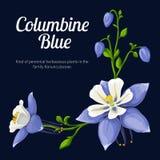 Ejemplo del vector de un azul del colombine de la flor Fotos de archivo