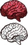Ejemplo del vector de un cerebro Imágenes de archivo libres de regalías