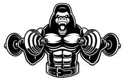 Ejemplo del vector de un culturista del gorila con pesas de gimnasia