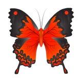 Ejemplo del vector de una mariposa roja stock de ilustración
