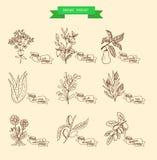 Ejemplo del vector de una planta Imagen de archivo libre de regalías