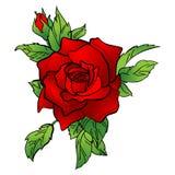 Ejemplo del vector de una rosa roja ilustración del vector