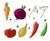 Ejemplo del vector de verduras: cebolla, pimientas, golpe, zanahoria y tomate en el fondo blanco ilustración del vector