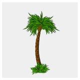 Ejemplo del vector del árbol de coco Imagen de archivo libre de regalías