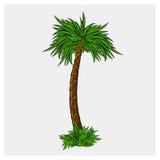Ejemplo del vector del árbol de coco Foto de archivo libre de regalías