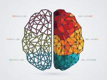 Ejemplo del vector del cerebro Imagen de archivo libre de regalías