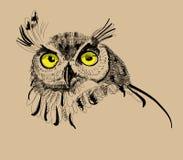Ejemplo del vector del dibujo del búho Fotos de archivo libres de regalías